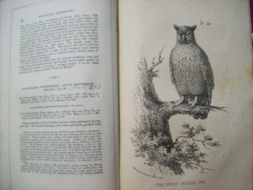 Wilson's American Ornithology with Notes By Jardine: To Which is Added A Synopsis of American Birds, Including Those Descibed By Bonaparte, Audubon, Nuttall, and Richardson